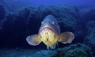 Южные моря России: Рыбный день отменяется