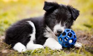 Зоопсихолог: собаки как дети