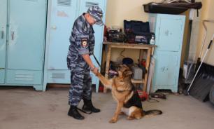 """Сахалинские полицейские тащили собаку за машиной для """"тренировки"""""""