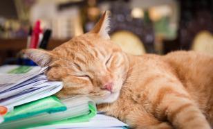 Зоологи: кошки делятся на правшей и левшей