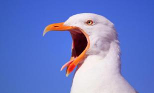 Американская полиция разыскивает мужчину за убийство чайки
