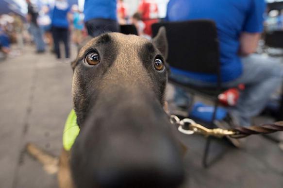 Любовь к собакам обусловлена генетически - ученые Швеции и Великобритании