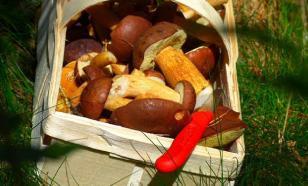 """Госдума вернет """"заготконторы"""" для закупок ягод, грибов, орехов у населения"""
