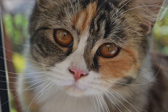 "Спасти кошку, отправившуюся антифризом, помогла ""водочная"" капельница"