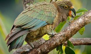 Птицы могут помогать другим выращивать потомство