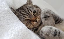 Кошачьи поцелуи и прочие нежности: как на самом деле относится к вам ваша кошка