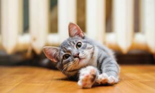 В Совете Федерации предложили ограничить число кошек и собак в квартирах