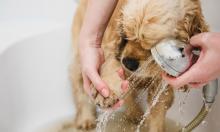 Как правильно мыть лапы собакам после прогулки