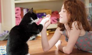 Мифы о поведении котов и кошек