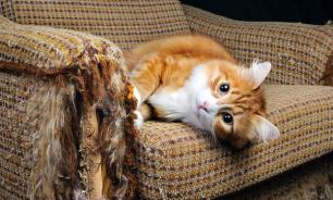 Как сделать так, чтобы кошка не драла мебель