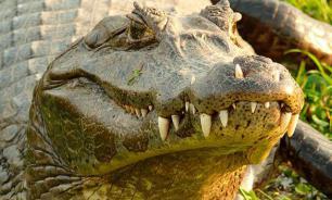 Утащивщий мальчика в парке Орландо аллигатор усыплен