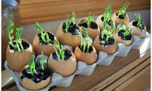 Выращиваем рассаду оригинальными способами