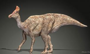 """Палеонтологи обнаружили окаменелости """"утконосых"""" динозавров в Монголии"""
