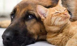 Кошки против собак: пепси или кола?