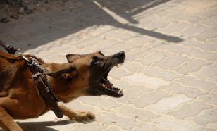 В Перми завели дело после нападения собак на 87-летнюю пенсионерку