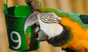 В Индии арестовали попугая по обвинению в оскорблении пожилой женщины