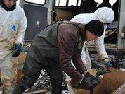 В Сахалинской области развернули реабилитационный центр для птиц