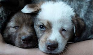 Роберт Алтермосер против того, чтобы люди покупали собак