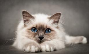 Как завоевать доверие кошки