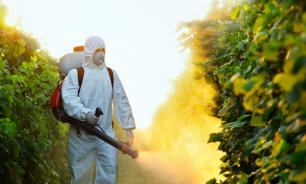 С насекомыми борьба — больше пользы иль вреда?