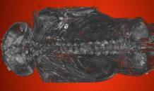Мумия ястреба обернулась эмбрионом человека
