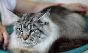 Взрослая кошка в новом доме – как помочь с адаптацией?