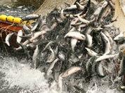 Восток Азии в спорах за нефть и рыбу