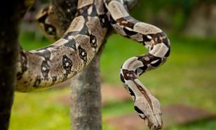 Змеи слышат, как  трепещут сердца жертв...