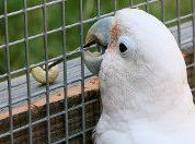 Попугай доказал, что он не дурак!