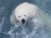 Неизвестные факты освоения Русской Арктики