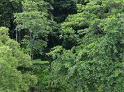 Чем дальше в лес - тем меньше дров?
