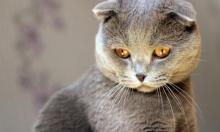 Почему надо завести дома кошку