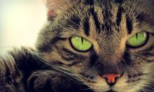 Котики захватили мир раньше до появления интернета