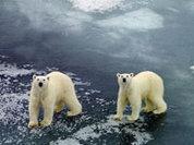 За Арктику повоюет маленький Умка