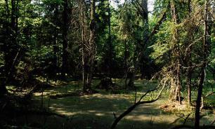 Алтайскую пенсионерку вытащили из болота с помощью беспилотника