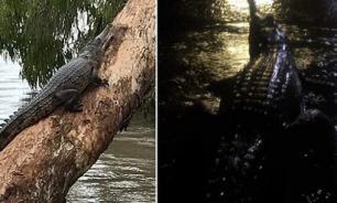 В результате наводнения на улицах Таунсвилла поселились крокодилы