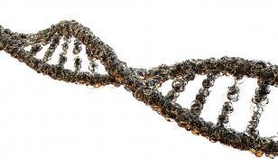 Тип инфекции зависит от поведения генов