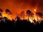 """Вотчину """"Терминатора"""" снова терзают лесные пожары"""