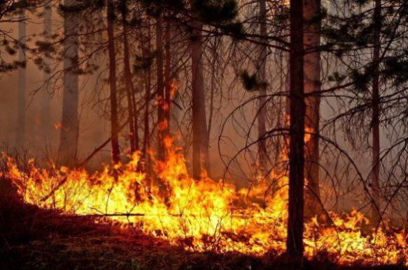 В заповедниках России потушили последний пожар