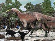"Предки тираннозавра носили ""пуховики"""
