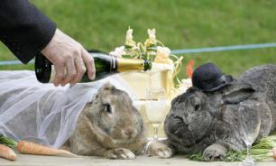 Как Австралия с кроликами боролась
