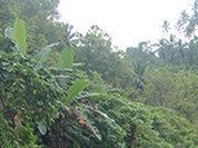 Папуасы настаивают на независимости