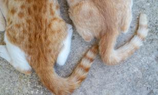 Хвост трубой: расшифровываем кошачьи знаки