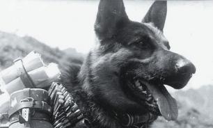 Животные на войне: как братья наши меньшие помогали солдатам