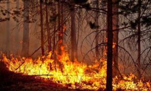 Губернаторов могут лишить права принимать решения о тушении пожаров