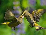 Каждая птица - неповторима!
