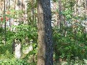 В Калужской области могут построить два лесоперерабатывающих завода