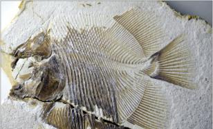 """Найдена останки """"пираньи"""" возрастом 150 млн лет"""
