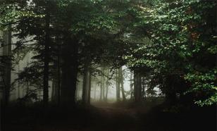 Женщина потерялась в уральском лесу и месяц жила в избушке