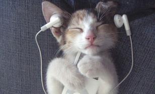 Как разные музыкальные жанры влияют на кошек